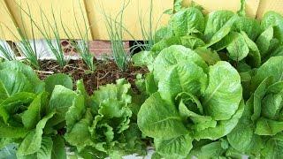 Como fazer horta organica em casa ou apartamento
