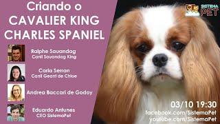 Criando Cavalier King Charles Spaniel