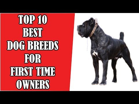 Top 10 Best Dog Breeds for First Time Owners - DOG LOVER PLANET