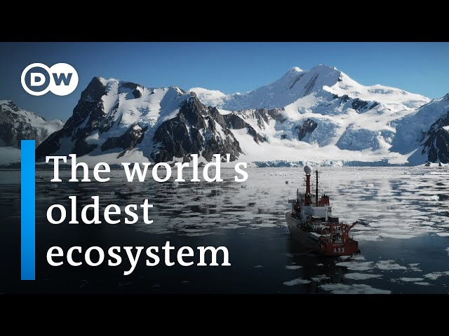Antarctica: A message from another planet    DW Documentary