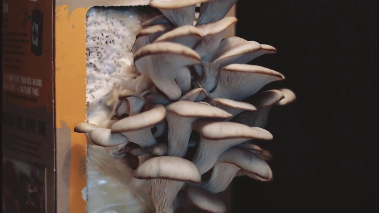 Back to the Roots Mushroom Farm Time Lapse