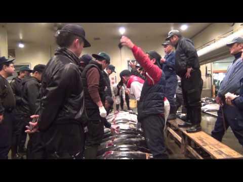 Subasta de Atún en el mercado de Osaka / Tuna auction Osaka fish market