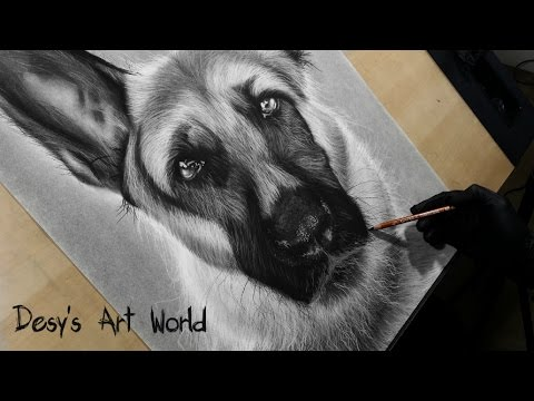 Photo-realistic German Shepherd drawing - time lapse video