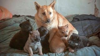 Собака с щенками охраняет заброшенный дом в котором ее предал хозяин До слез help the puppies