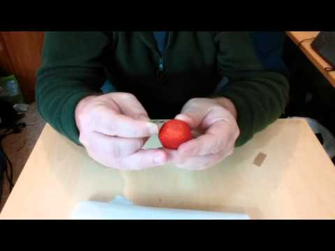 Extracting seeds and growing strawberry plants using a fresh fruit!