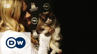 القط الغضبان في تقويم أوبل للعام الجديد | يوروماكس
