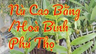 Điệp Nù Cao Bằng/Hoà Bình/Phú Thọ (0868376205)