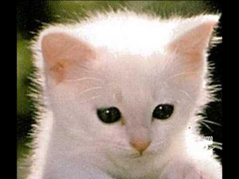 Qua la zampa consigli per piccoli gatti randagi antenna 2 for I gattini piccoli