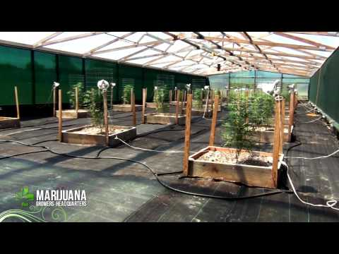 How to grow Marijuana Like a Pro: Big Sluggers 2012 Greenhouse/Outdoor Grow