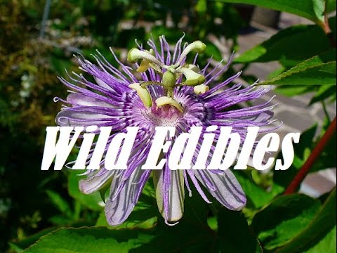 how to grow maypop passion flower