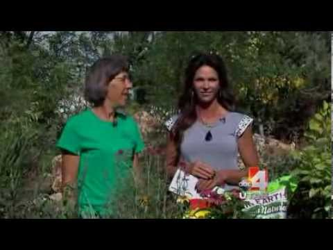 Edible Plants Salt Lake City Utah