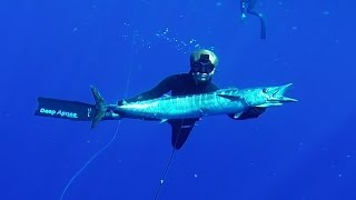 Whacking Wahoo with Jorge Mantilla