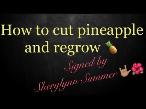 How to cut pineapple and regrow- Signed by Sherylynn Summer
