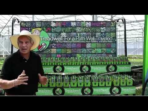 Treadwell Plants Overview