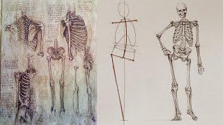 Human Body Skeleton - Anatomy Master Class