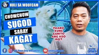 Pinoy Dog Whisperer sinugod ng Chow Chow