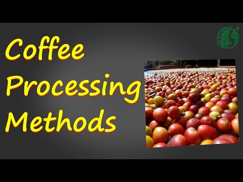 Coffee Processing Methods Ep 3