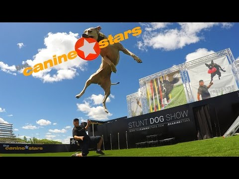 Stunt Dog Show - The Canine Stars