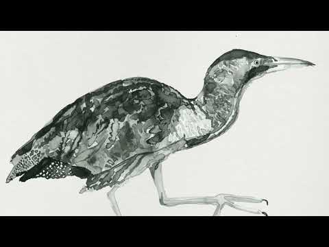 Cosmo Sheldrake - Wake Up Call (Cuckoo)