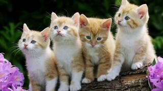 Wow! Very Cute My Kittens, Cute Cats Make Funny, My Favorite Kittens Play Fun Baby Toddlers Kids