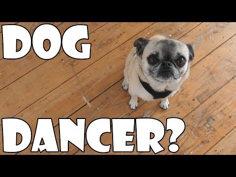 DOG DANCER?