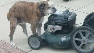 bulldog lawn equipment.