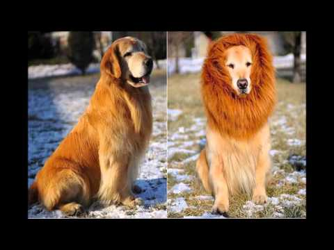 Disfraces super originales para perros en Halloween / Costume dogs ideas for Halloween