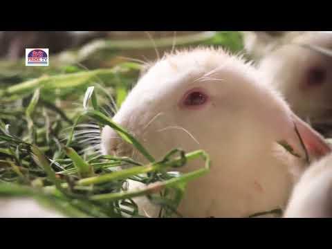Full episode of padampur chitwan rabbit farm documentary report