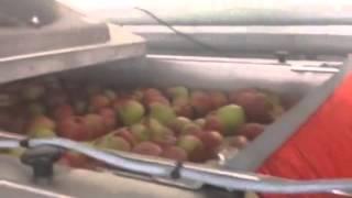 видео купить яблоки оптом