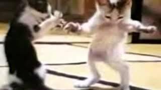 القطه ترقص على اغنية ندا حبيبة بابا اضحك من قلبككك-😂🤣