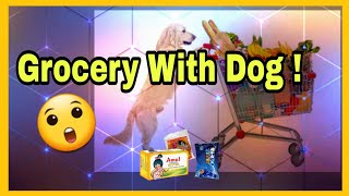 Funniest Moment Ever - My Dog with Grocery - Helping me or Troubling me !! (At Home)