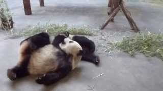 Qing Shan and Zhao Yang Play Fighting