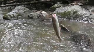 Fishing at Uncle Wayne's Cabin