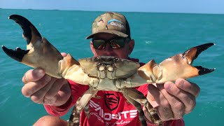GIANT STONE CRAB Catch Clean & Cook
