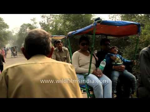 Rickshaw ride through Bharatpur Bird Sanctuary, Rajasthan