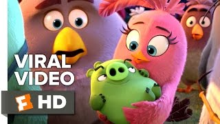 The Angry Birds Movie VIRAL VIDEO - International Day of Happiness (2016) - Movie HD
