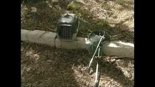 Помощь челябинских спасателей понадобилась енотовидной собаке дикое животное застряло в заброшенном
