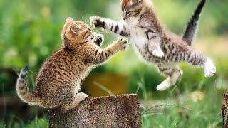 Уличные Котята Играют