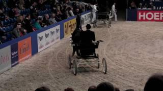 Manno - Dutch Harness Horse