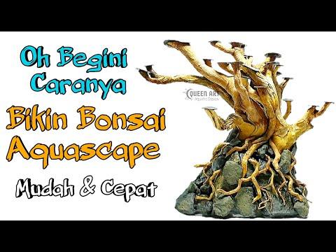 cara-membuat-bonsai-aquascape-untuk-pemula