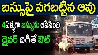 పగబట్టిన ఆవు 4ఏళ్ళుగా ఆబస్సు డ్రైవర్ దిగితేఒట్టు||Cow Block the Bus Route Since 4Years in Karnataka