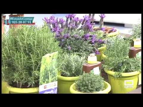 Las mejores plantas arom ticas para tener en casa - Plantas aromaticas interior ...
