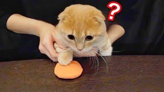 粘土で猫の足形をとってみると予想以上に可愛すぎた