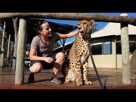 On Safari in Zimbabwe