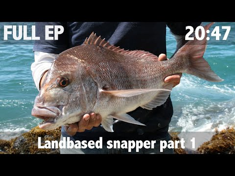 Landbased Snapper Pt 1 Bay Of Islands