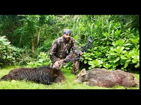 Oahu North Shore Boar Bow Hunting 2019