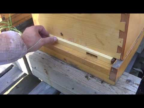 Beekeeping Hive Entrance Reducers How I Use Em Youtube