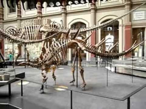 Berlin, Museum für Naturkunde 2012