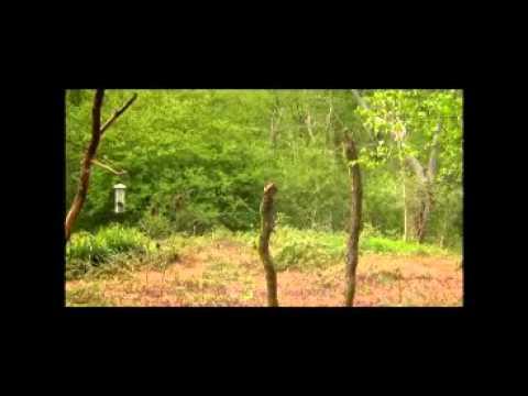 woodland-bird-photography-with-david-plummer