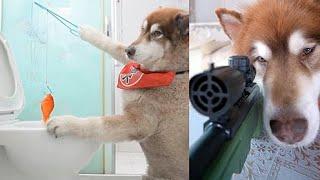 神犬路虎  狗狗知道对错 !狗狗是人类最忠诚的朋友希望善待每一个可爱的狗狗[爱心] #16